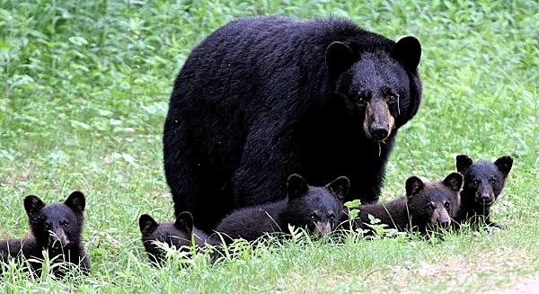bearfamilyadults