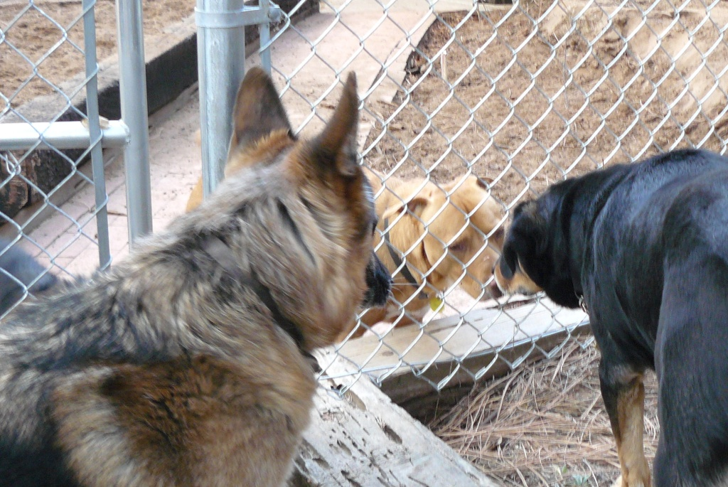 Pharaoh and Hazel saying 'Hi' through the fence to Kaycee. February, 2012.