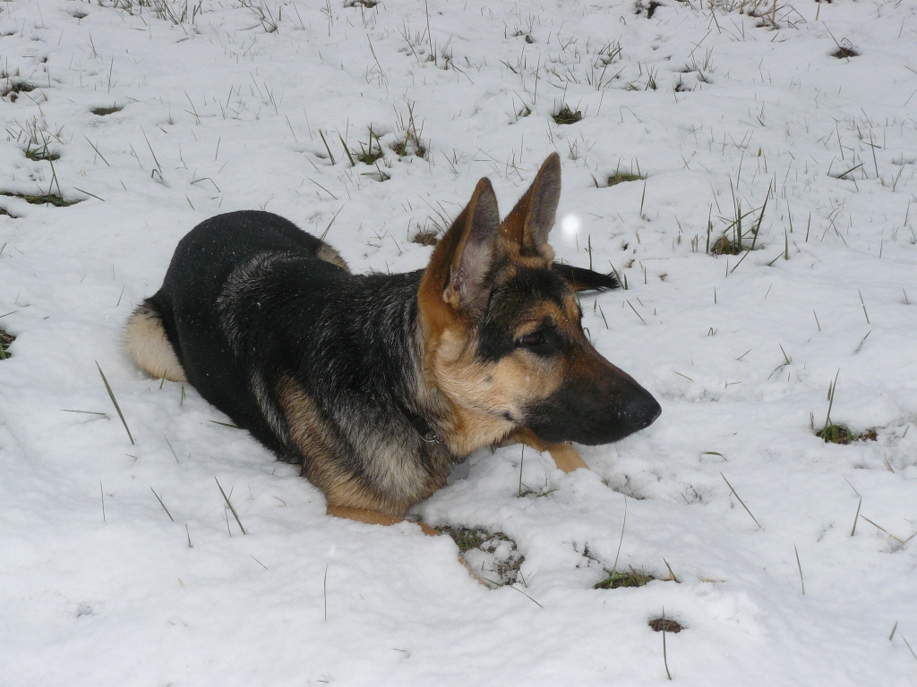Cleo in the snow.