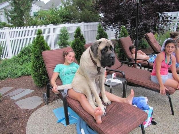 Bigdog1
