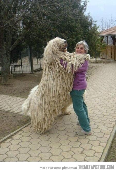 bigdog11