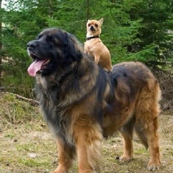 bigdog16