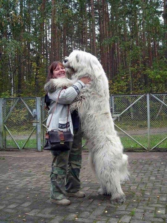 bigdog3