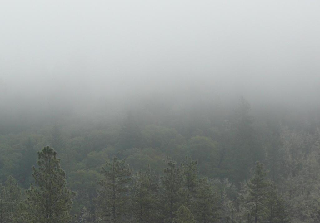 Early morning mist, Merlin, Oregon