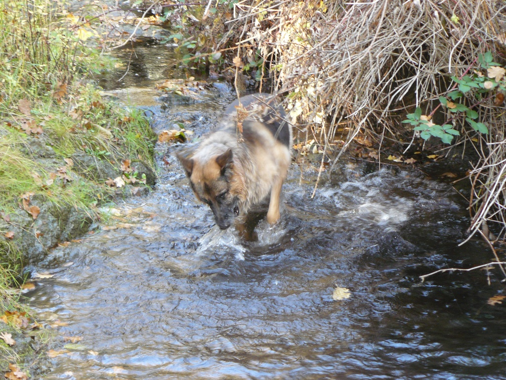 Pharaoh checking out our creek.