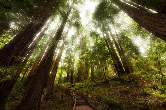 Muir Woods, California, U.S.