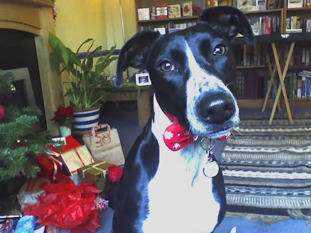 Fergus, the healing dog.