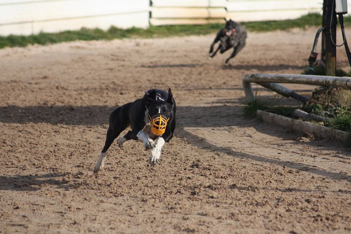 Fergus doing what he loves - running very fast!
