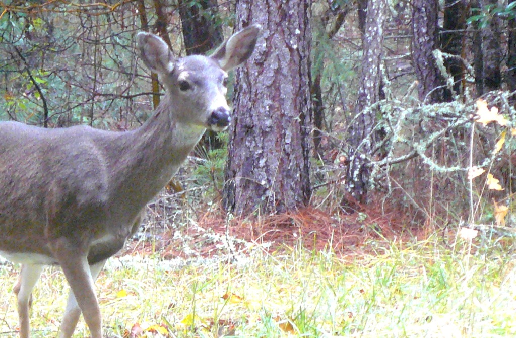 Deer very cautiously meets new humans on the block!