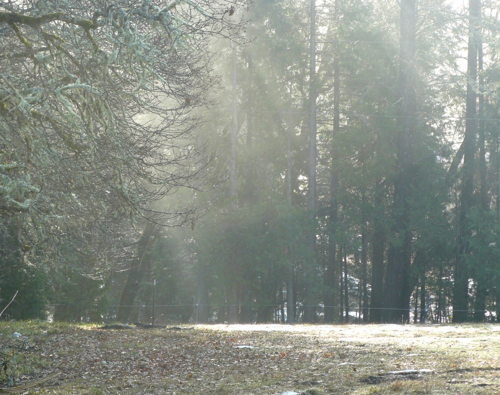 Winter sunlight filtering through the trees. Oregon, January 2013.