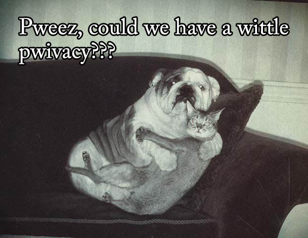 funny-dog-cat-photo-with-captions-08-could-we-have-a-little-privacy-please