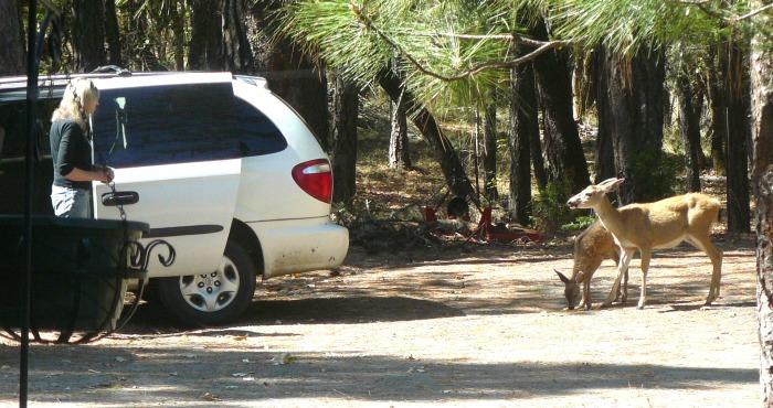 Trust between deer and Jean.