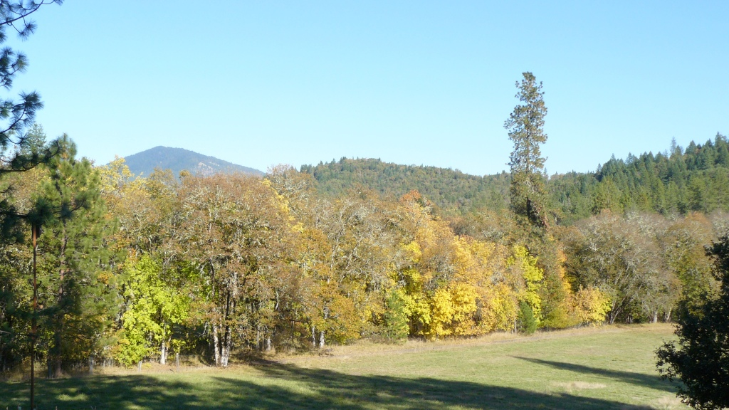 Autumn colours on the trees along our Northern boundary.  Mt. Sexton in the distance.