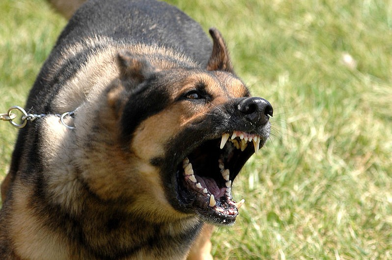 snarling-dog-e1360684279321