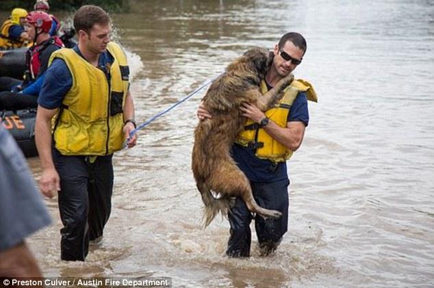 Saving dog