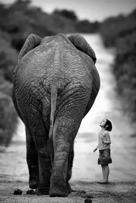 cool-girl-elephant-photo-black-white