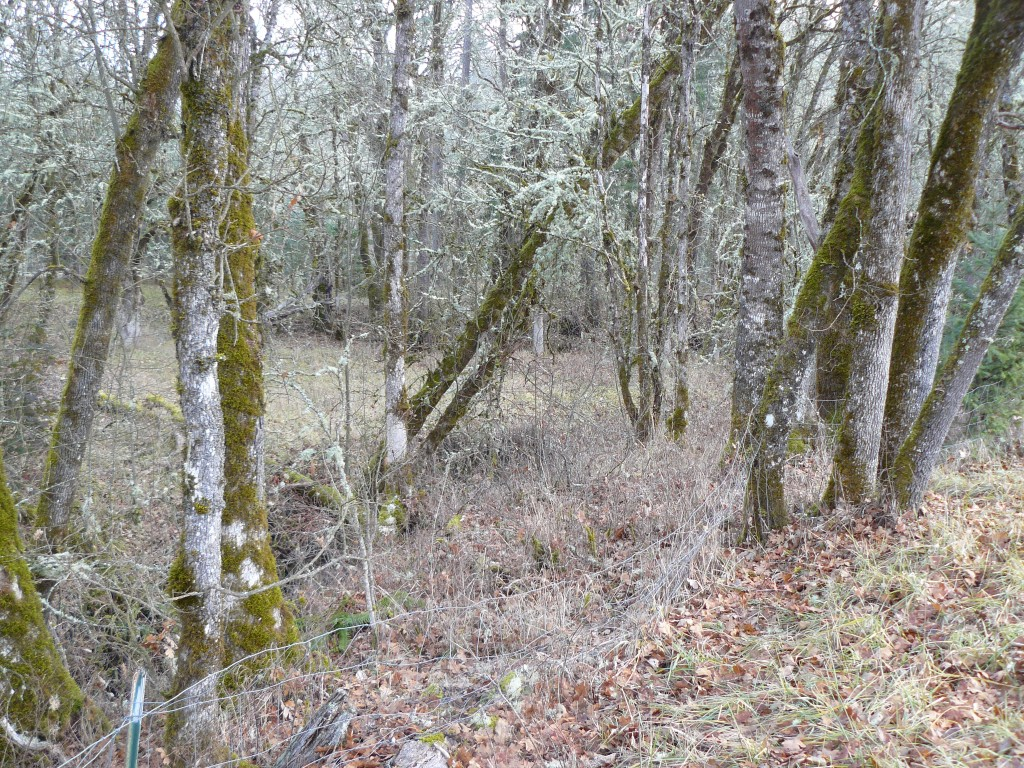 Corinne's field visible through the trees and undergrowth.