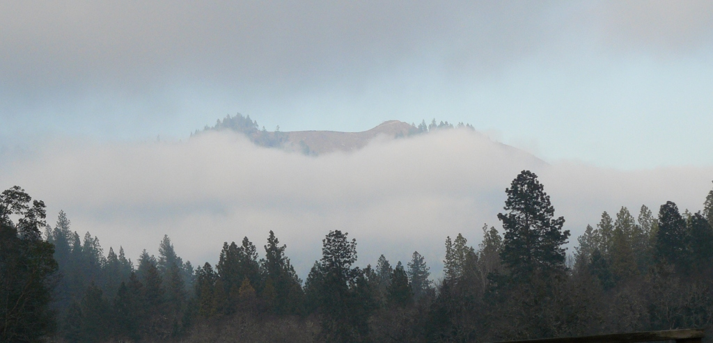 A local ridge demonstrating 'clear-cutting' mania poking above the valley mist.