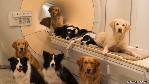 Pet dogs took part in the MRI scanning study.