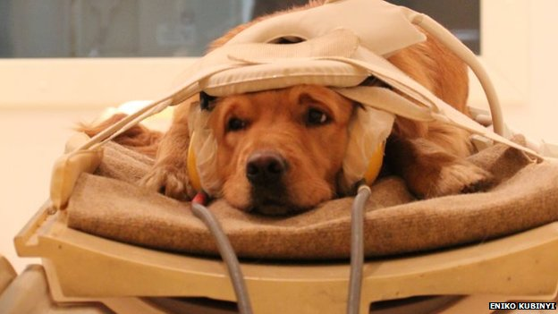 The canine brain reacted to voices in the same way that the human brain does.