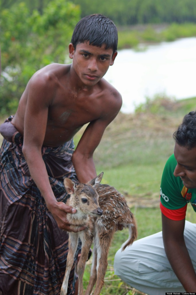 PIC FROM HASIB WAHAB / CATERS NEWS (Pictured: DEER RETURNED SAFELY) - A brave boy fearlessly risked his own life - to save a helpless baby deer from drowning. The boy, believed to be in his early teens, defiantly held the young fawn in one hand above his head as he plunged through the surging river. During the ordeal onlookers were unsure whether the boy was going to appear again. When he finally made it to the other side the locals cheered as the deer was reunited with its family. The incident took place in Noakhali, Bangladesh, when the young fawn became separated from its family during torrential rain and fast-rising floods.