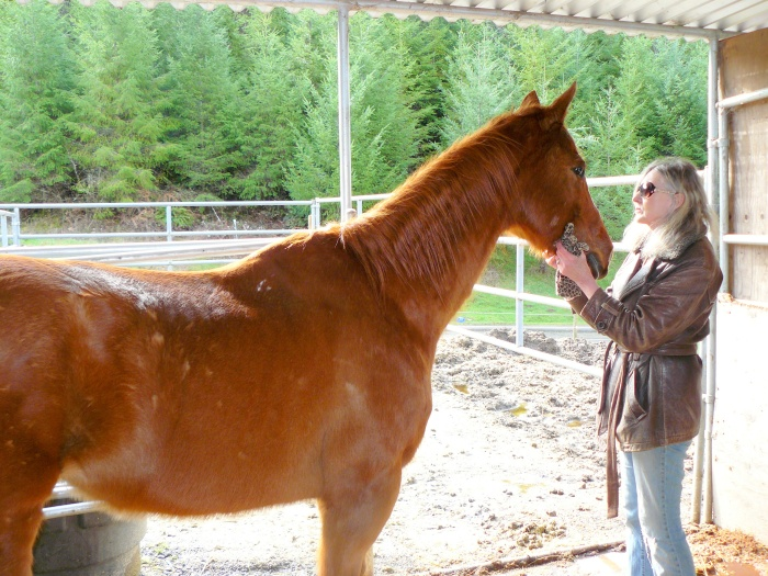 Ranger, the 15-year-old horse we hope to adopt.