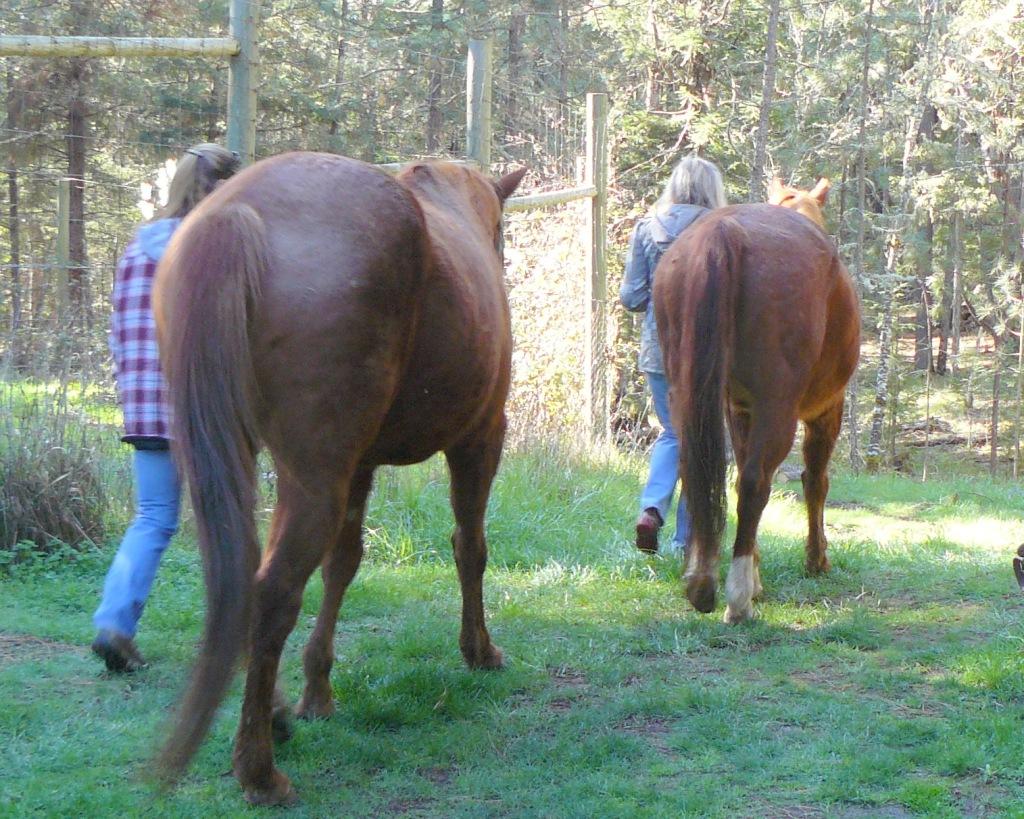 Jean leading Ranger; Darla leading Ben.