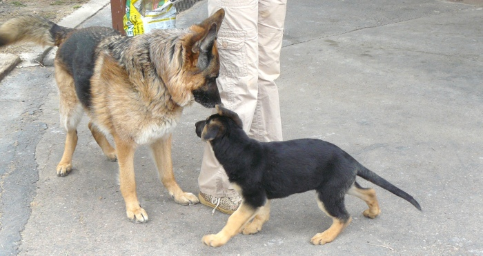 First meeting between Pharaoh and Cleo; April 7th, 2012.