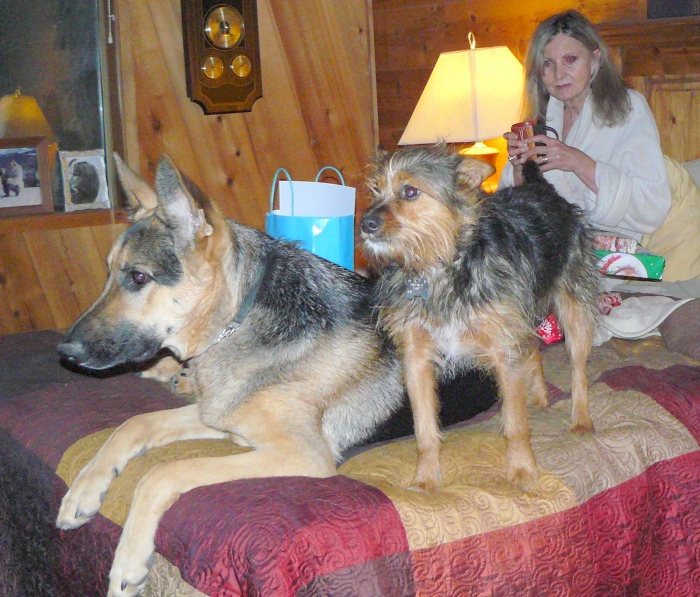 Cleo and Sweeny, 2013.  Our first Christmas Day in our home in Oregon.