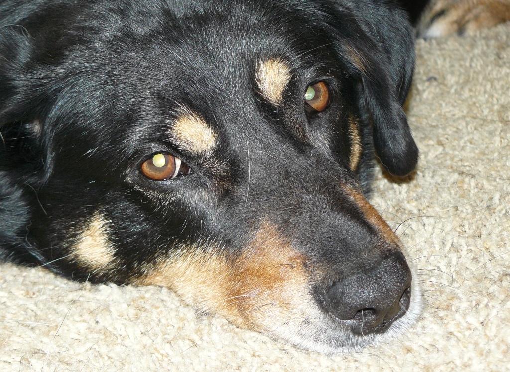 Picture of Hazel taken in the last twenty-four hours.