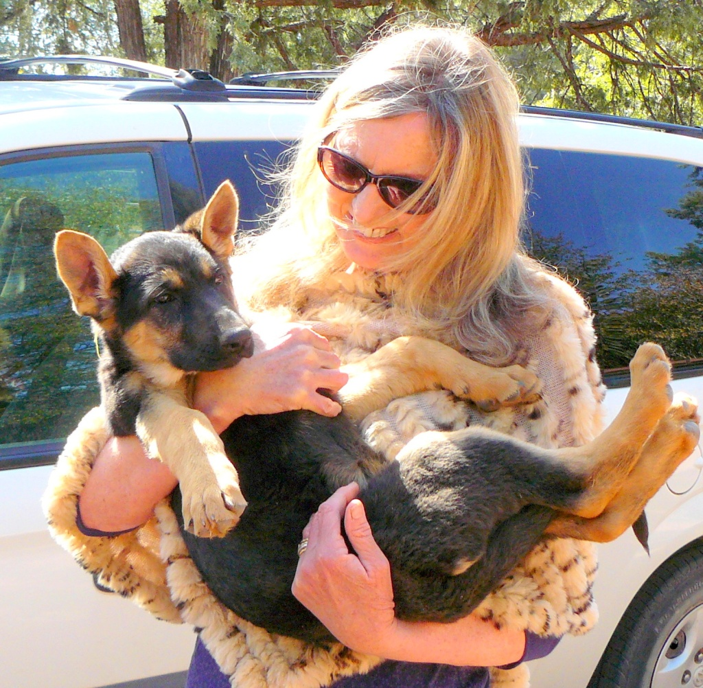 Puppy Cleo coming home - April 6th, 2012