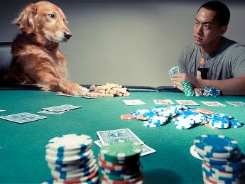 dog-playing-poker-345jl110210