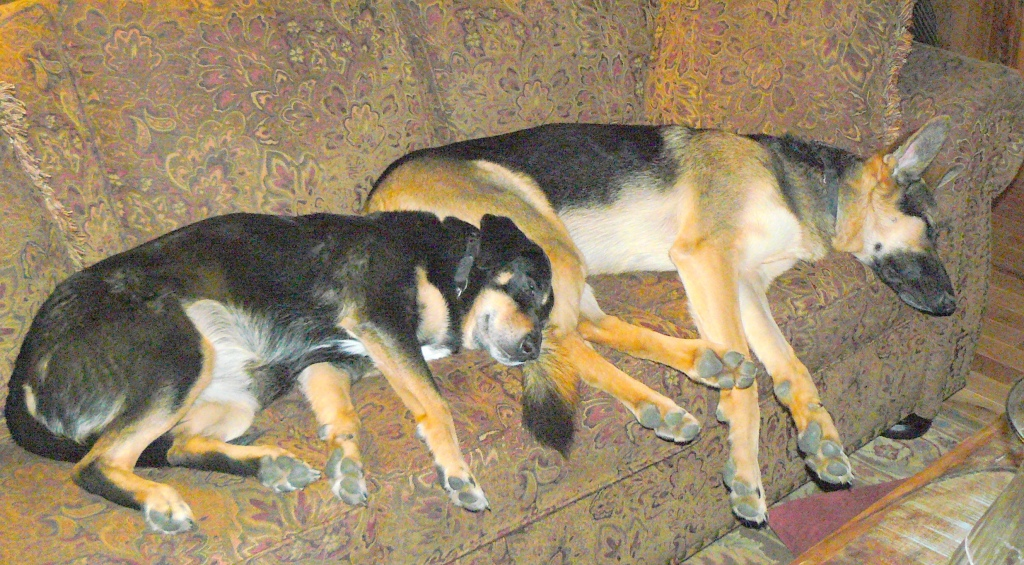 Hazel asleep with her dear friend Cleo. (Hazel to the left.)