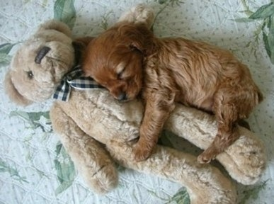 Everybody needs a good sleep toy!