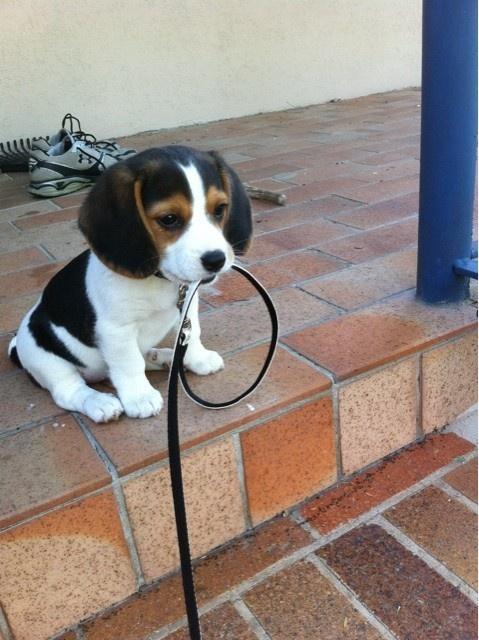 I'm ready for my walk!