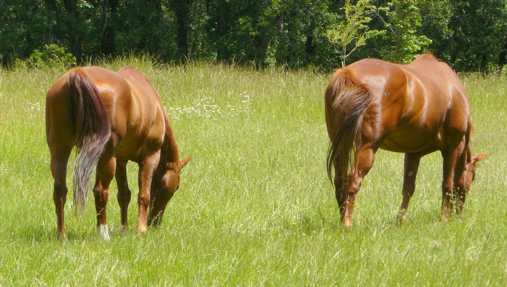 Ranger (LHS) and Ben enjoying our open grassland.
