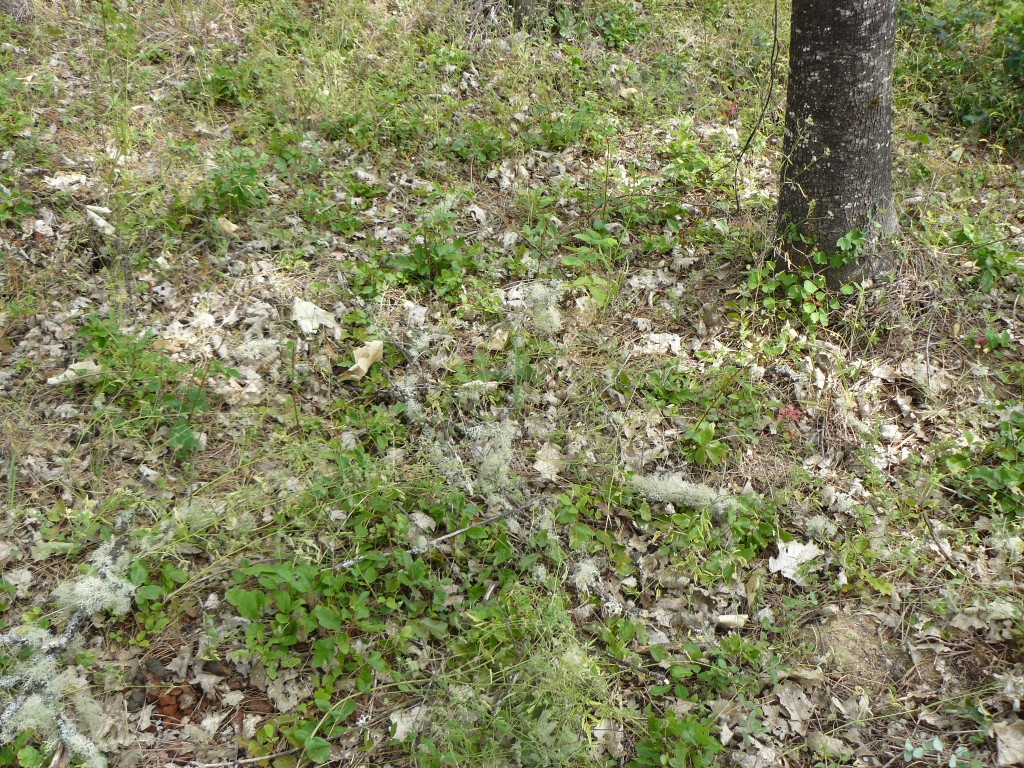 The patch of ground where the birds were found.