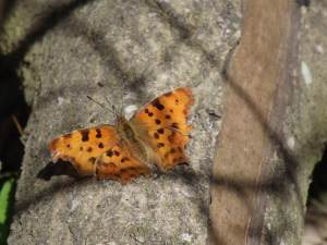 The butterfly and I enjoyed a common connection in the sun on a fallen tree – we became one.