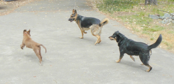 Oliver, Cleo and Hazel playing together.