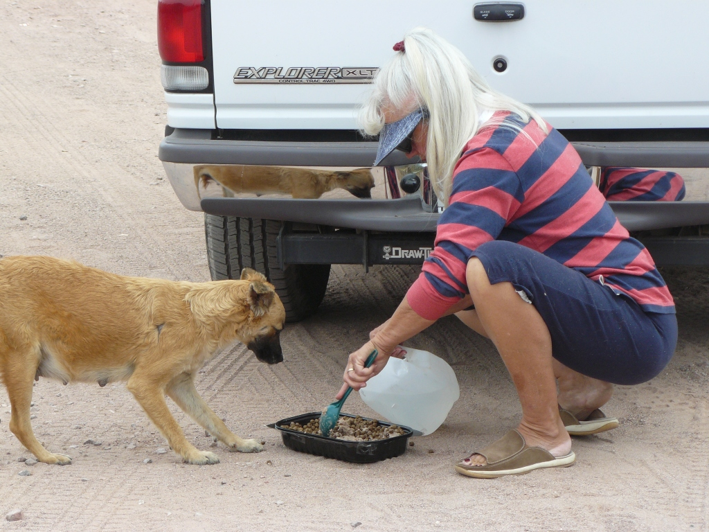 Suzann caring for a feral Mexican street dog.