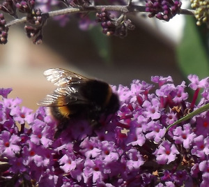 Bees are localised, sustainable and self-reliant, something humanity will learn the hard way.