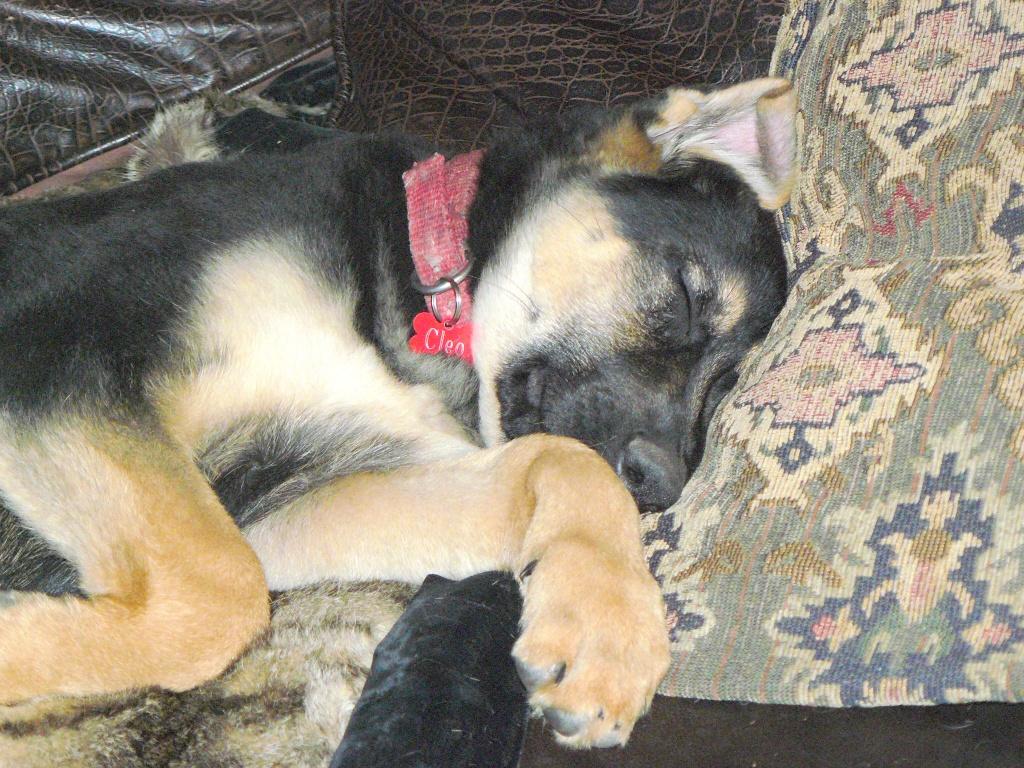Cleo deep in meditation.
