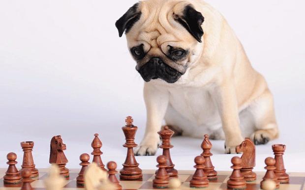 Canine brains: test your dog's intelligence Photo: Alamy