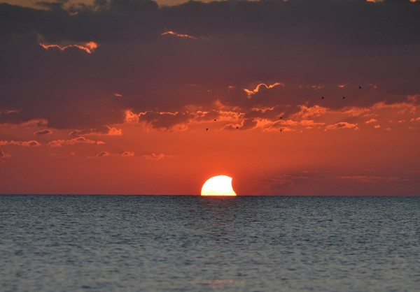 Sunset partial solar eclipse, with sea birds, from the beach in Englewood, Florida, overlooking the Gulf of Mexico. Photo by K. King.