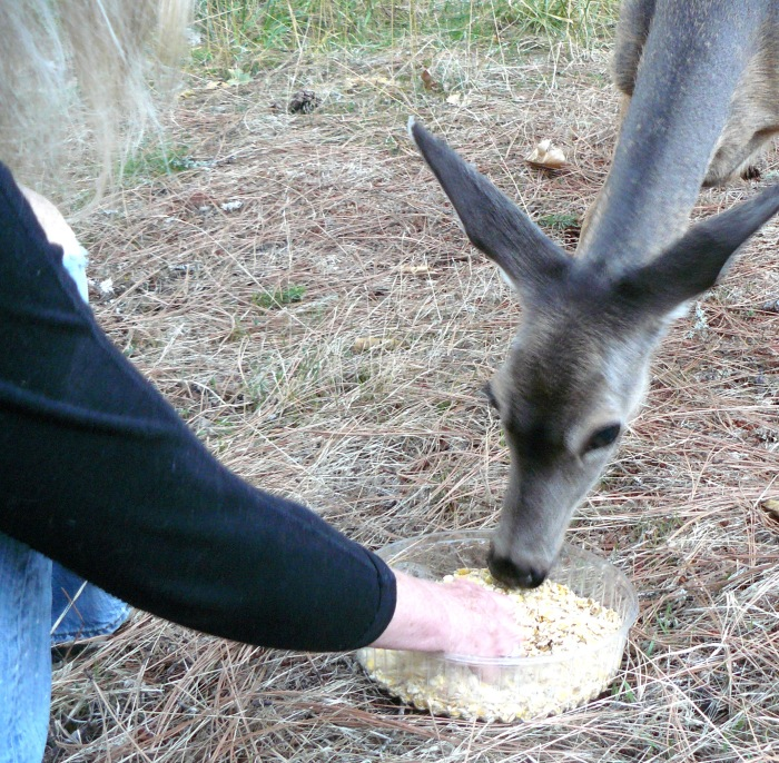 Jean reaches forward and gently draws the tray closer to us. Mother deer continues to feed.