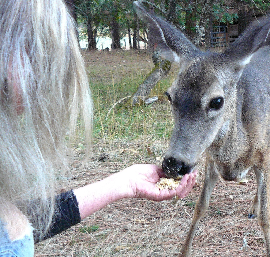 The trust between the deer and Jean then enabled the deer to feed from Jean's hand.