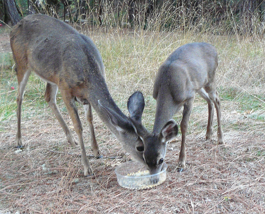 The culmination of the most magical of experiences: mother deer and her fawn eating together some three feet in front of us.