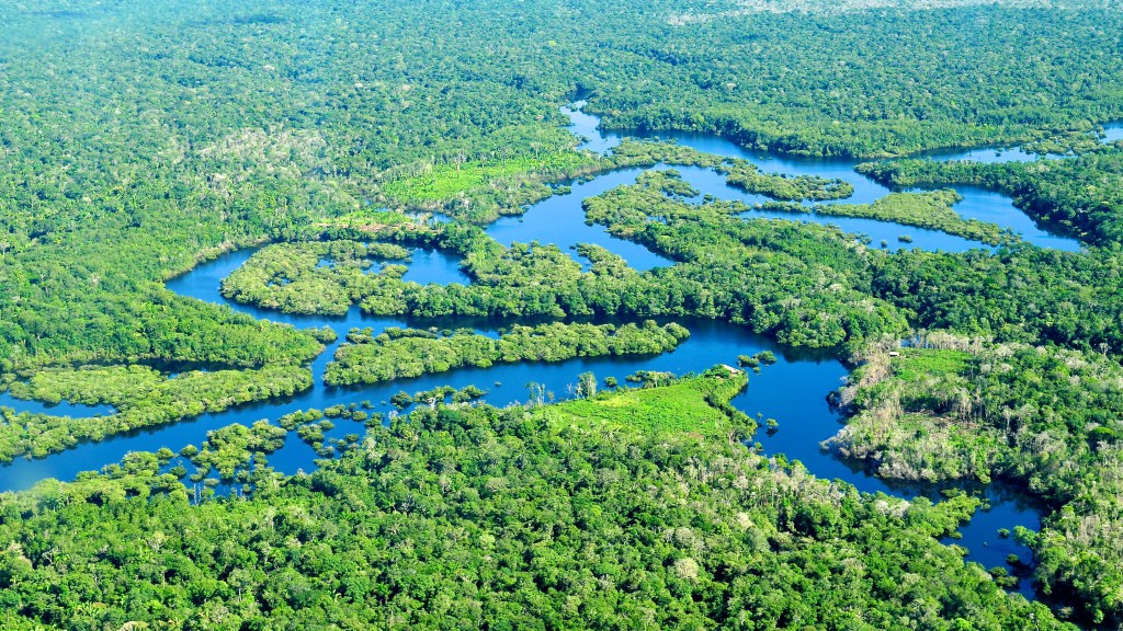 rainforest-e1411587105860
