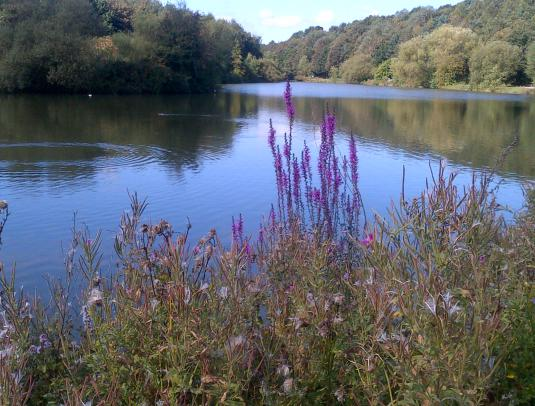 Vicar's Water. A Sanctuary for wild life.