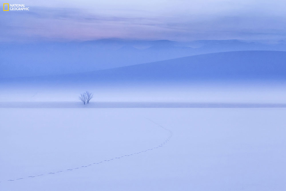 """""""Before dawn [and] 25 degrees below zero. Just a short while [earlier], the rabbit seems to have walked across the snowy field."""" Location: Biei Hokkaido JAPAN. Photo by Mitsuhiko Kamada."""